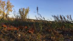 Worlds Largest Buffalo Jamestown ND Drone Video